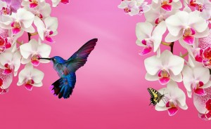 Close Encounters of the Feathered Kind + 4 Ways to Invite Hummingbird Energy into Your Life
